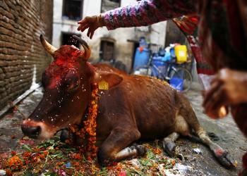 متطرفون يضربون مسلما حتى الموت لتهريب أبقار في الهند