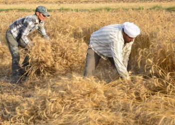 مصر قد تفرج عن 18 ألف طن قمح روسي صادرته لاحتوائه «الحشرات»