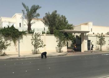بالصور.. «شامبانزي» يتجول في شوارع الرياض الراقية