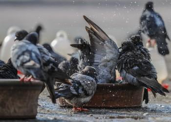 في كل كبد رطبة أجر.. حملة قطرية لسقي الطيور خلال الصيف