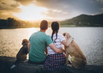 فوائد صحية لتربية الكلاب تكشفها دراسة جديدة