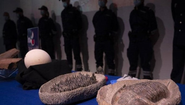 المغرب يتسلم من فرنسا 25 ألف قطعة أثرية منهوبة