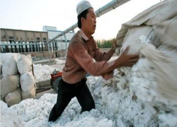 أمريكا تمنع استيراد قطن شينجيانج الصينية بسبب سخرة الإيجور