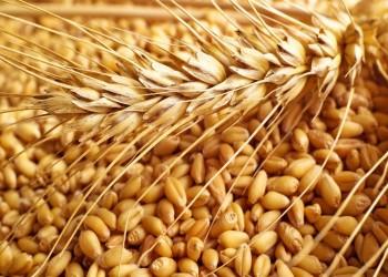 أولى دفعات المعونة الأمريكية من القمح تصل إلى السودان