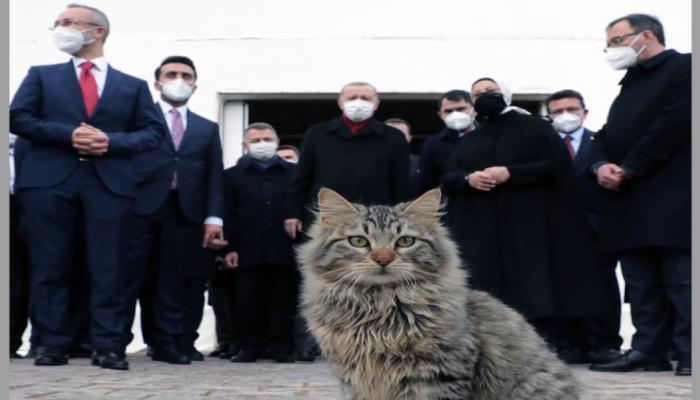 أردوغان يفتح حسابا في تليجرام وينشر أول صورة فيه