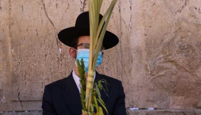 تزويد يهود الإمارات وإيران بثمار خاصة لإقامة عيد العرش
